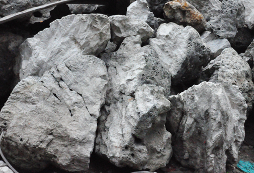 đá san hô