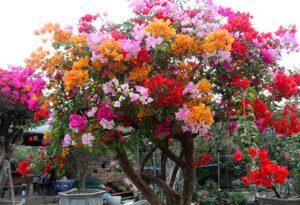 9 loại hoa hay trồng sân vườn nhà