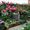 Trồng cây hoa sân vườn