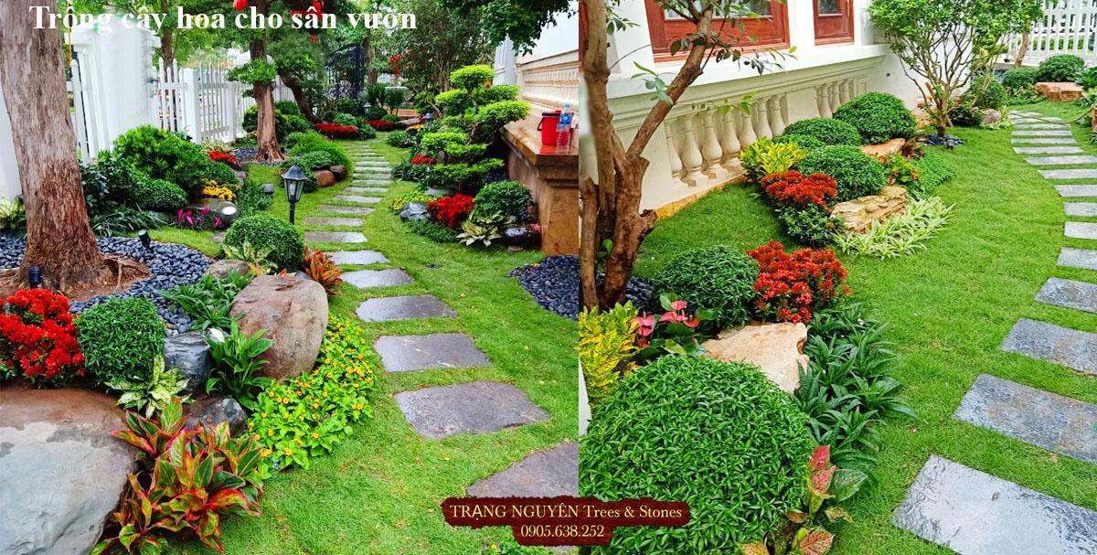Trồng cây kiểng sân vườn