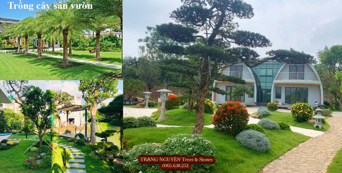 Trồng cây cảnh trang trí sân vườn
