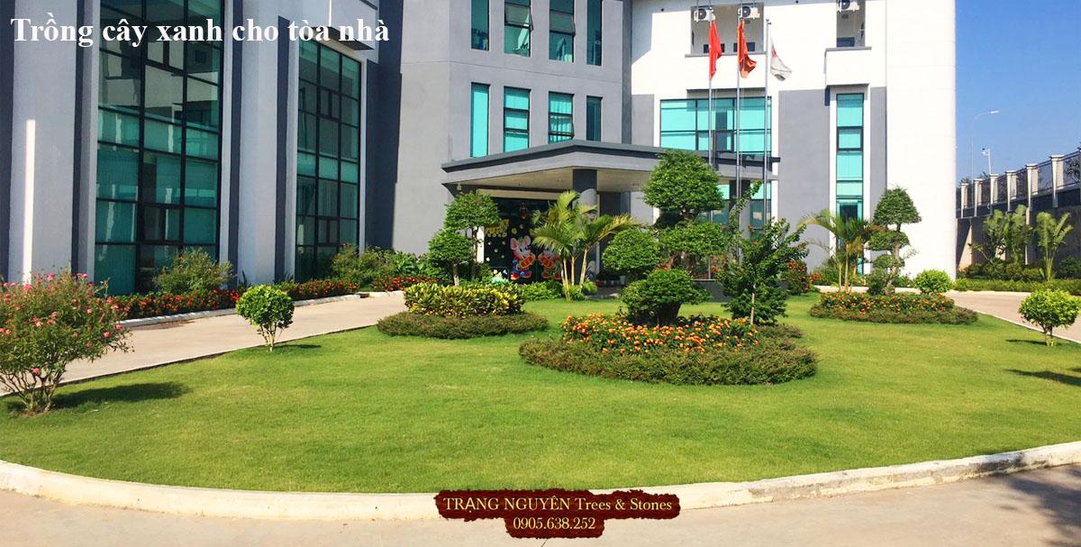 Trồng cây xanh cảnh quan cho tòa nhà