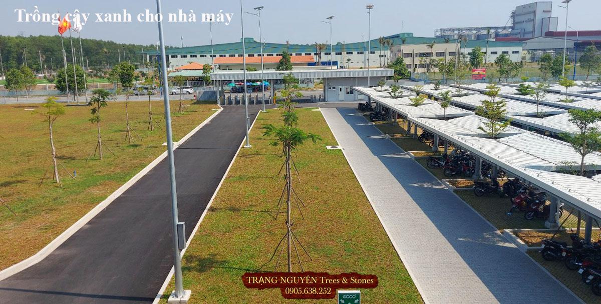 Trồng cây xanh cho nhà máy