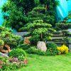 Trồng cây xanh sân vườn