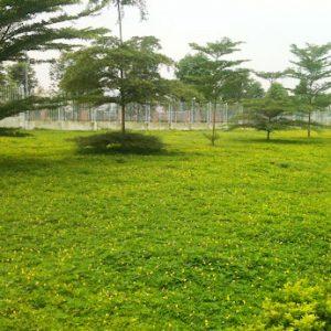 Trồng cỏ cho nhà máy