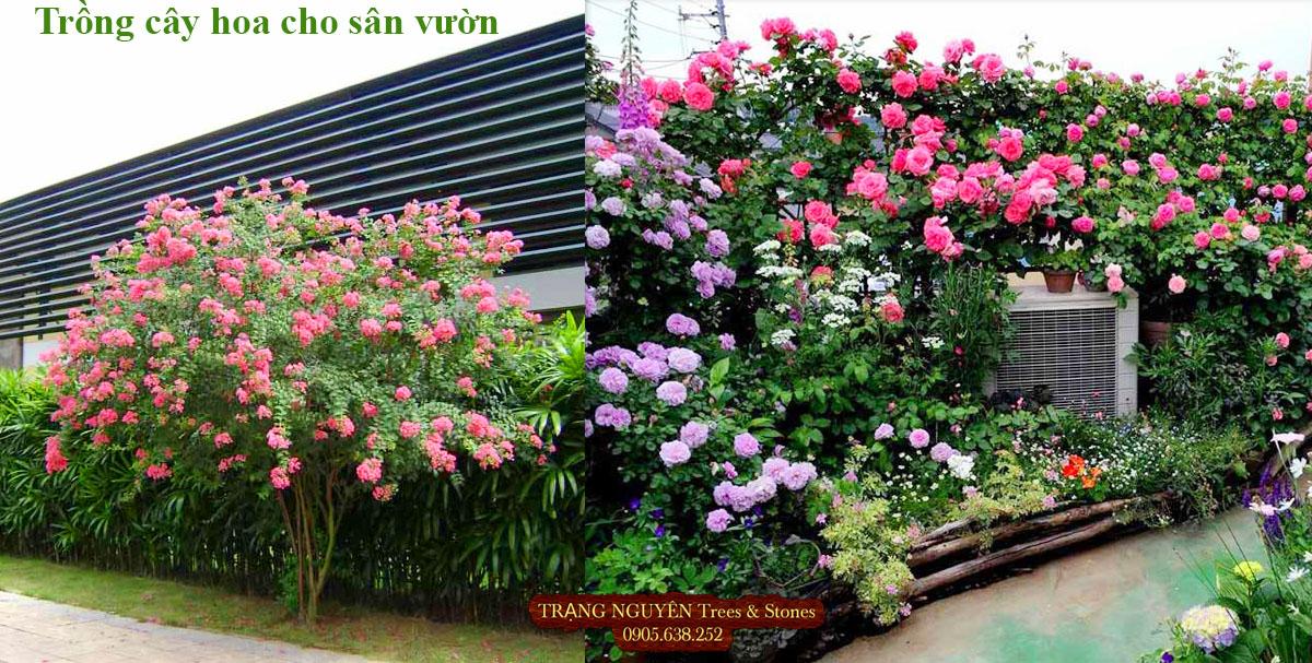 Trồng hoa sân vườn